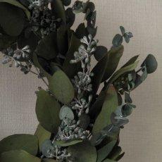 ユーカリの花のツボミ