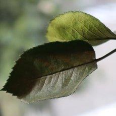 葉も茎もすべてプリザービング加工